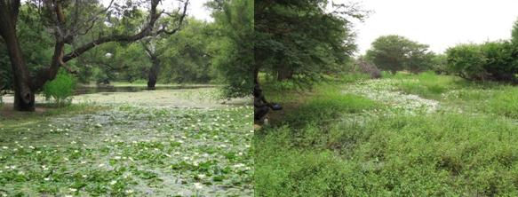 Vegetation inside and around ponds in Barkedji
